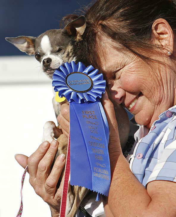 Kathleen Francis, of Clearlake, Calif., holds her purebred chihuahua &#34;Princess Abby&#34; after winning the World&#39;s Ugliest Dog Contest Friday, June 25, 2010, in Petaluma, Calif. &#40;AP Photo&#47;Ben Margot&#41; <span class=meta>(AP Photo&#47; Ben Margot)</span>