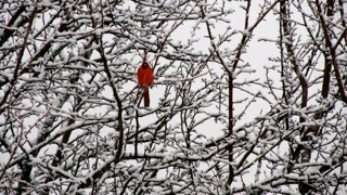 A snow bird in Schaumburg- Send your snow photos to USeeIt@abc7chicago.com