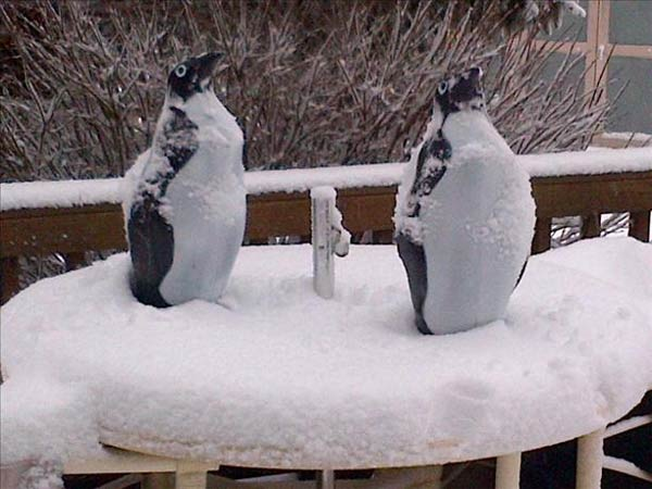 Algonquin penguins. Send your snow photos to USeeIt@abc7chicago.com