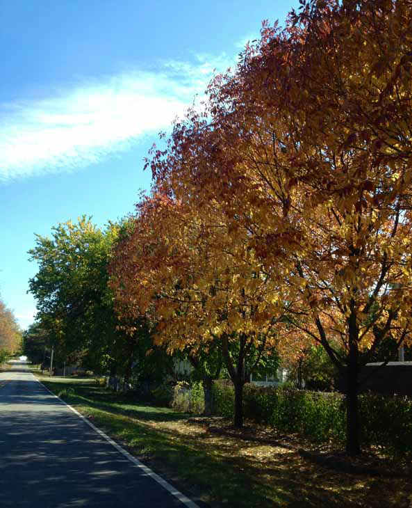 West Chicago, Illinois. ABC7 Chicago viewers are sending in their beautiful fall photos! E-mail yours to Useeit@abc.com or go to seeit.abc7chicago.com