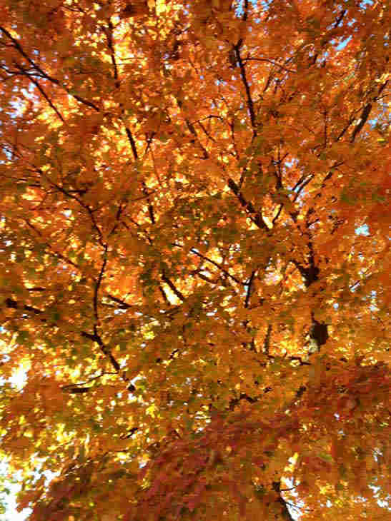 "<div class=""meta image-caption""><div class=""origin-logo origin-image ""><span></span></div><span class=""caption-text"">West Chicago, Illinois. ABC7 Chicago viewers are sending in their beautiful fall photos! E-mail yours to Useeit@abc.com or go to seeit.abc7chicago.com</span></div>"