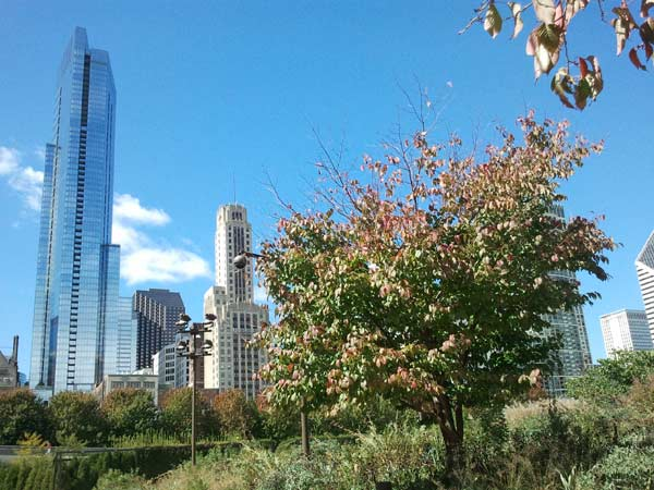 Autumnal Equinox at the Lurie Garden. ABC7 Chicago viewers are sending in their beautiful fall photos! E-mail yours to Useeit@abc.com or go to seeit.abc7chicago.com