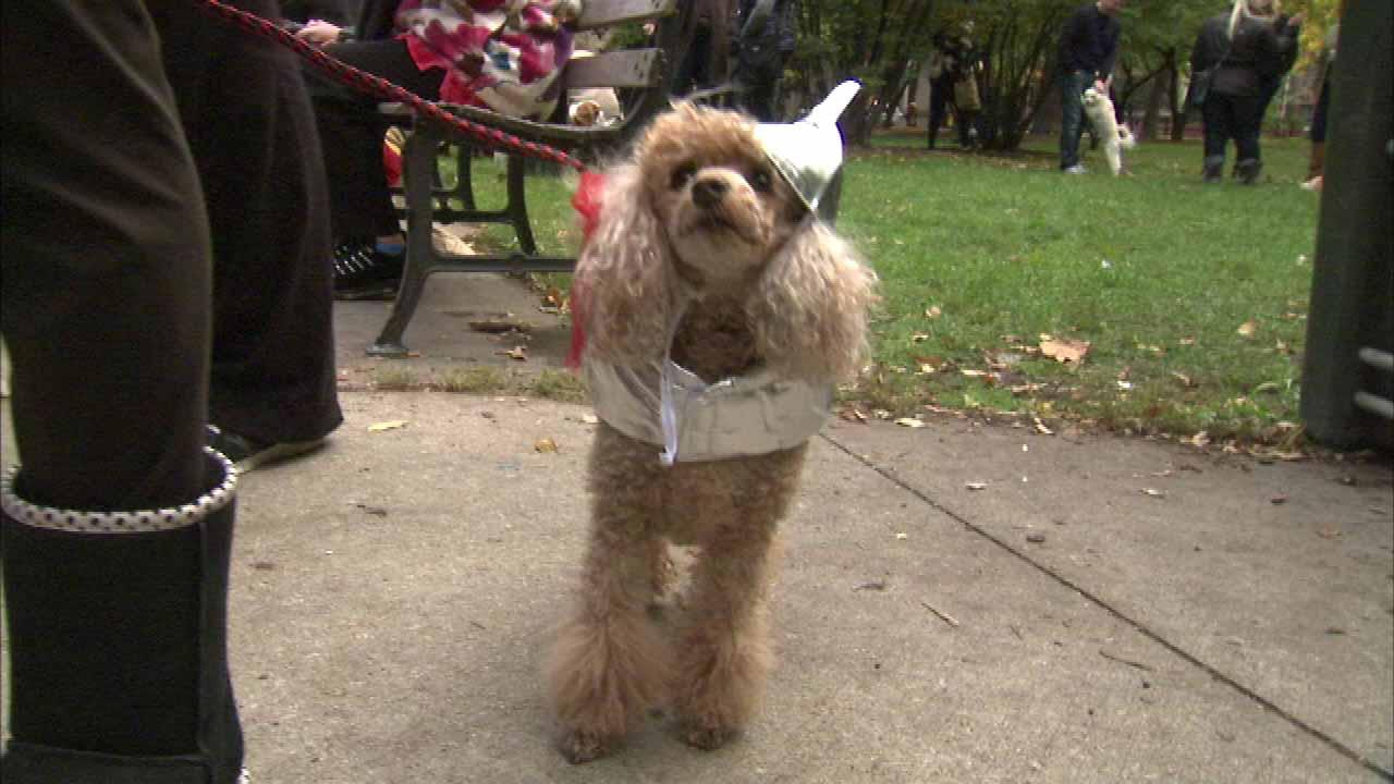 Halloween is going to the dogs as both pets and their owners join in some Halloween festivities at a party and parade held Sunday afternoon in the Gold Coast.