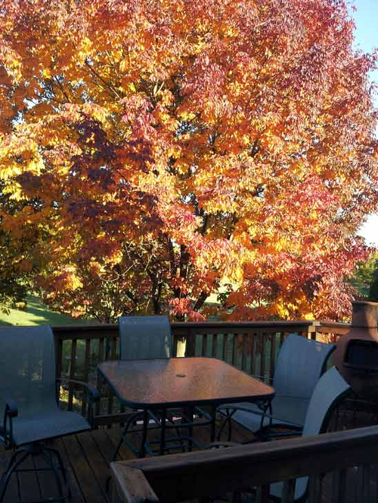 Roselle, Illinois. ABC7 Chicago viewers are sending in their beautiful fall photos! E-mail yours to Useeit@abc.com or go to seeit.abc7chicago.com