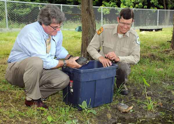 : Bill Zeigler, senior vice president of animal collections and care for the Chicago Zoological Society &#40;pictured left&#41;, and Dan Thompson, ecologist for the Forest Preserve District of DuPage County, releasing Blanding&#39;s turtles to an off-exhibit pond at Brookfield Zoo. Blanding&#39;s turtles are endangered in Illinois and threatened nationwide, but the Chicago Zoological Society in collaboration with the Forest Preserve District of DuPage County, and other local organizations, is leading an initiative to increase the local wild population. The program will allow staff to develop and improve breeding and rearing techniques that will increase the number of turtles available for release to the wild.   <span class=meta>(Jim Schulz&#47;Chicago Zoological Society)</span>