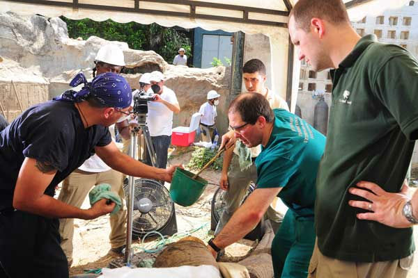 Dr. Barron Hall &#40;center&#41;, a board certified dentist and oral surgeon from the Animal Dental Clinic in Virginia, begins to pack the open root of the elephant?s tusk with dental cement. Assisting him is Dr. Carlos Sanchez &#40;left&#41;, associate veterinarian for the Chicago Zoological Society?s Brookfield Zoo. <span class=meta>(Photo&#47;Barranquilla Zoo)</span>