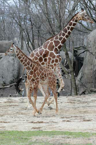 "<div class=""meta ""><span class=""caption-text "">Dave, 5 months old (foreground), with his mom Arnieta, 6</span></div>"