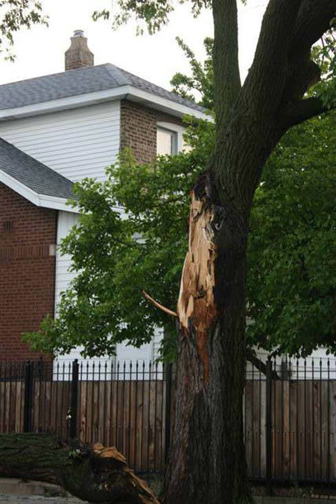 Downed Tree Hits Car &amp; Blocks Lamon Street <span class=meta>(WLS Photo)</span>