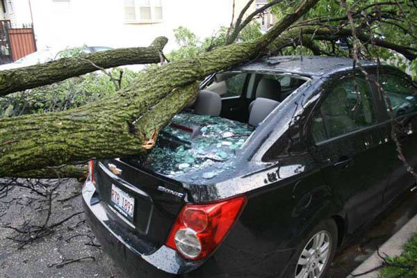 "<div class=""meta ""><span class=""caption-text "">Downed Tree Hits Car & Blocks Lamon Street (WLS Photo)</span></div>"