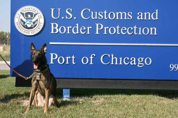 &#34;CBP canine Shadow is an 8-year-old Belgian Malinois whose nose definitely knows how to ferret out hidden drugs in imported cargo and mail,&#34; said CBP Chicago Acting Director of Field Operations William A. Ferrara. &#34;Shadow is one of the top dogs at the CBP O?Hare Mail Facility who works tirelessly keeping our country and communities safe from harmful drugs.&#34; &#40;Info from US Customs press release&#41; <span class=meta>(CBP)</span>