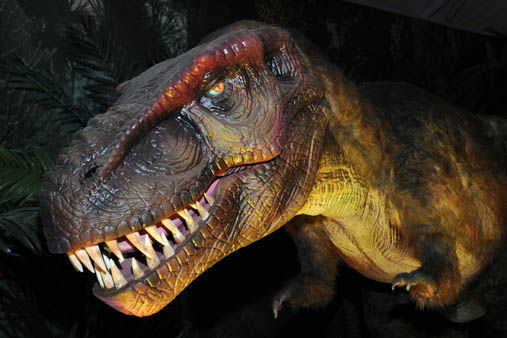 "<div class=""meta image-caption""><div class=""origin-logo origin-image ""><span></span></div><span class=""caption-text"">This the 4--foot-tall 'baby' dinosaur, a Tyrannosaurus rex. (Jim Schulz/Chicago Zoological Society)</span></div>"