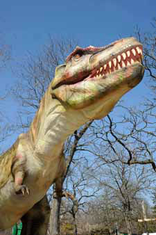 "<div class=""meta image-caption""><div class=""origin-logo origin-image ""><span></span></div><span class=""caption-text"">Here's the adult-sized Tyrannosaurus rex from the Jurassic and Cretaceous periods 200 to 65 million years ago. (Jim Schulz/Chicago Zoological Society)</span></div>"