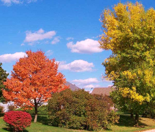 Fall Colors in Spring Grove! ABC7 Chicago viewers are sending in their beautiful fall photos! E-mail yours to Useeit@abc.com or go to seeit.abc7chicago.com