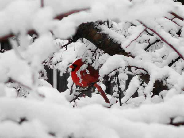 Send your snow photos to USeeIt@abc7chicago.com
