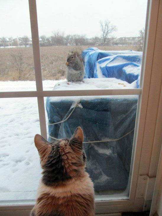 Our cat loves watching the squirrels on our  patio...   Tom from Schaumburg     | Send your snow photos to USeeIt@abc7chicago.com