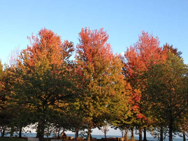 This view near Hollywood and Lake Shore Drive. ABC7 Chicago viewers are sending in their beautiful fall photos! E-mail yours to Useeit@abc.com or go to seeit.abc7chicago.com