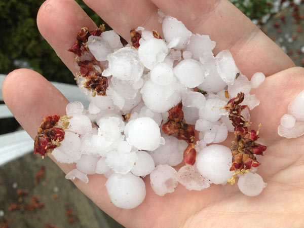 Hail photograph by viewer from Westchester, Illinois. Photos from ABC7 viewers submitted to useeit@abc7chicago.com.