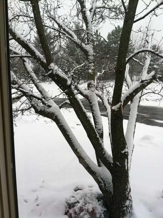 Submitted by an ABC 7 viewer from North Barrington. Send your snow photos to USeeIt@abc7chicago.com