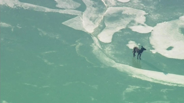 Drama unfolded on an icy Lake Michigan Tuesday morning near Jackson Harbor after a dog got stuck out on the icy water.