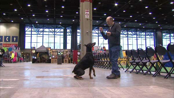 The International Kennel Club Dog Show 2014 runs this weekend at McCormick Place in Chicago. <span class=meta>(WLS Photo)</span>