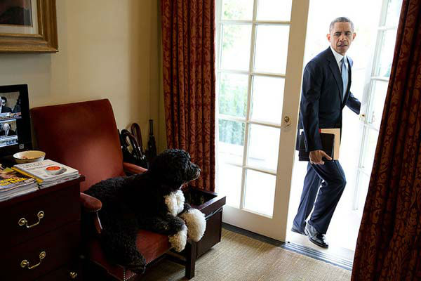 Nov. 6, 2013: Bo was just hanging out in the Outer Oval Office when the President walked in to begin his day. Each morning, the President always enters through this door rather than the direct outside door to the Oval Office.   <span class=meta>(Official White House Photo by Pete Souza)</span>