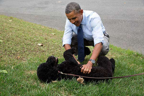 Aug. 19, 2013: The President plays with Sunny, the new Obama family pet, on the South Lawn on Sunny&#39;s first day at the White House.    <span class=meta>(Official White House Photo by Pete Souza)</span>