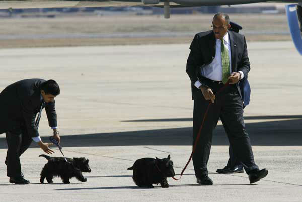 Presidential Valet Master Chief Sam Sutton, right walks  with President Bush&#39;s dogs, Barney, right, and Miss Beazley at Andrews Air Force Base, Md., Monday March. 3, 2008, after President Bush arrived back to Washington. &#40;AP Photo&#47;Jose Luis Magana&#41; <span class=meta>(AP Photo&#47; Jose Luis Magana)</span>