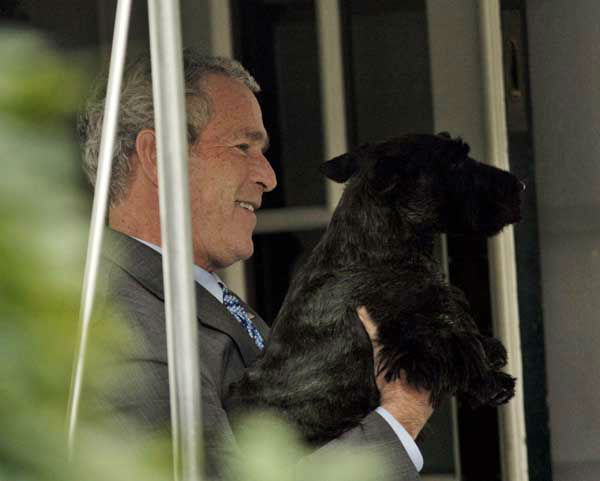 President Bush picks-up his dog Barney before walking into the main residence of the White House following his arrival, Wednesday, Oct. 15, 2008 in Washington. &#40;AP Photo&#47;Pablo Martinez Monsivais&#41; <span class=meta>(AP Photo&#47; Pablo Martinez Monsivais)</span>