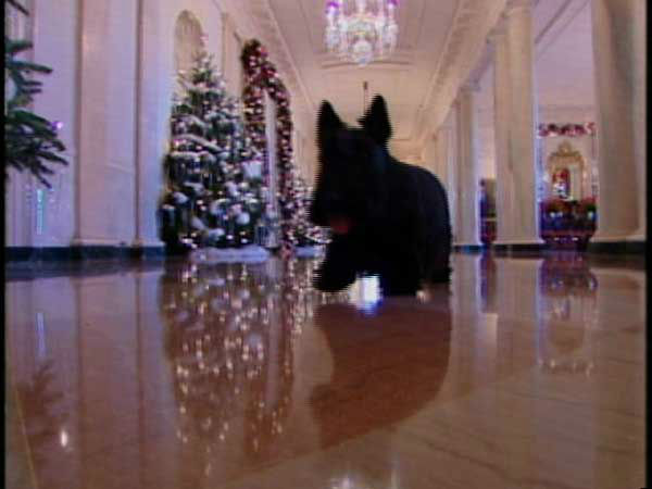 FILE - This Dec. 2008 video image provided by the White House shows Barney running through the White House in the &#34;Barney Cam&#34; Christmas holiday doggie video. In 2002 with public access to the White House more restricted in the aftermath of the 9&#47;11 terror attacks, first lady Laura Bush sent the terrier out to prowl the  house with a little camera attached to his collar. Barney Cam&#39;s 4.5-minute video tour of the mansion decorations got 24 million views in its first day on the White House Web site and his movies became an annual feature after that.  &#40;AP Photo&#47;White House, File&#41; <span class=meta>(AP Photo&#47; Anonymous)</span>