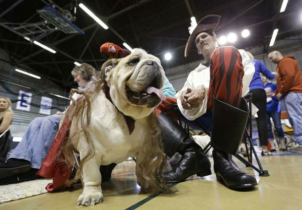 Dave Larson, of Des Moines, Iowa, sits with his bulldog Ramone during the 34th annual Drake Relays Beautiful Bulldog Contest, Monday, April 22, 2013, in Des Moines, Iowa. The pageant kicks off the Drake Relays festivities at Drake University where a bulldog is the mascot. &#40;AP Photo&#47;Charlie Neibergall&#41; <span class=meta>(AP Photo&#47; Charlie Neibergall)</span>