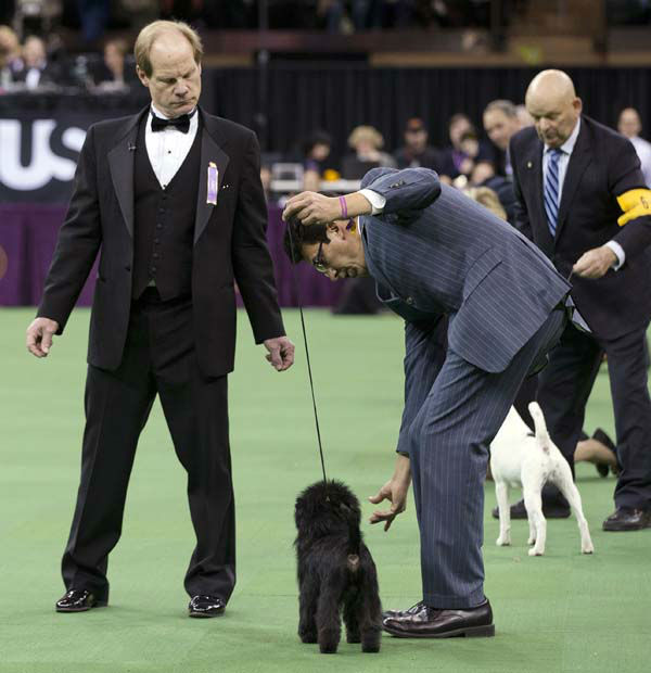 Judge Michael Dougherty, left, looks over Ernesto Lara as he handles Banana Joe, center, an affenpinscher who won Best in Show, during the 137th Westminster Kennel Club dog show, Tuesday, Feb. 12, 2013, at Madison Square Garden in New York. &#40;AP Photo&#47;Frank Franklin II&#41; <span class=meta>(AP Photo&#47; Frank Franklin II)</span>