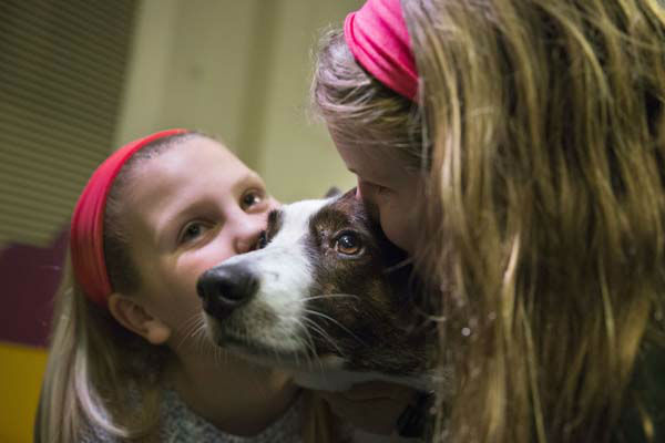 Coco, a Cardigan Welsh corgi, receives kisses on a grooming table in the benching area before the Westminster Kennel Club dog show, Tuesday, Feb. 11, 2014, in New York. &#40;AP Photo&#47;John Minchillo&#41; <span class=meta>(Photo&#47;John Minchillo)</span>