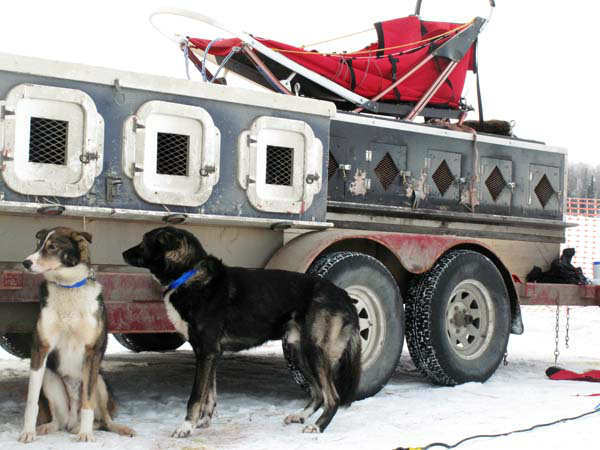 Dog wait to run in the Iditarod Trail Sled Dog Race, Sunday, March 3, 2013, in Willow, Alaska. 65 teams will be making their way through punishing wilderness toward the finish line in Nome on Alaska&#39;s western coast 1,000 miles away. &#40;AP Photo&#47;Rachel D&#39;Oro&#41; <span class=meta>(AP Photo&#47; Rachel D&#39;Oro)</span>