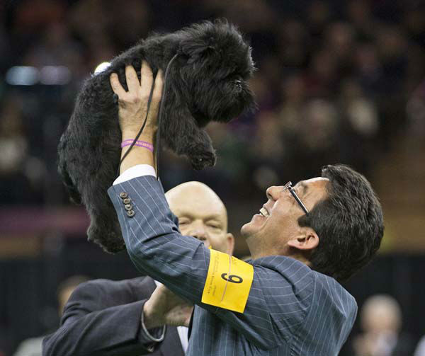Ernesto Lara celebrates with Banana Joe, an affenpinscher, who won Best in Show, during the 137th Westminster Kennel Club dog show, Tuesday, Feb. 12, 2013, at Madison Square Garden in New York. &#40;AP Photo&#47;Frank Franklin II&#41; <span class=meta>(AP Photo&#47; Frank Franklin II)</span>