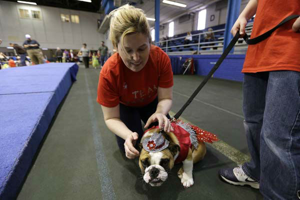 Laura Kares, of Omaha, Neb., puts a hat on her bulldog Molly during the 34th annual Drake Relays Beautiful Bulldog Contest, Monday, April 22, 2013, in Des Moines, Iowa. The pageant kicks off the Drake Relays festivities at Drake University where a bulldog is the mascot. &#40;AP Photo&#47;Charlie Neibergall&#41; <span class=meta>(AP Photo&#47; Charlie Neibergall)</span>