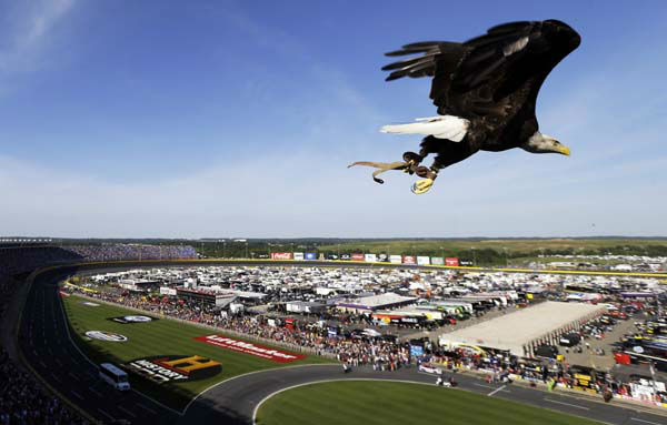 An eagle named Challenger is released prior to the NASCAR Sprint Cup Series Coca-Cola 600 auto race at the Charlotte Motor Speedway in Concord, N.C., Sunday, May 26, 2013. &#40;AP Photo&#47;Gerry Broome&#41; <span class=meta>(AP Photo&#47; Gerry Broome)</span>
