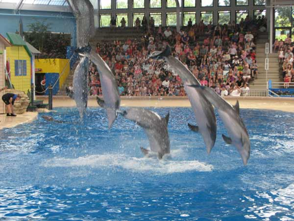 "<div class=""meta image-caption""><div class=""origin-logo origin-image ""><span></span></div><span class=""caption-text"">Dolphins at the Brookfield Zoo put on a show for a packed crowd including Jorja Coleman and Nataja Howse before their dad, Sgt. Howse, surprises them. (Evan Peterson/ABC7Chicago.com)</span></div>"