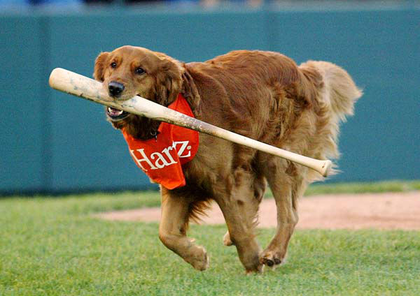 Trenton Thunder&#39;s Bat Dog, Chase, runs off the field after fetching a player&#39;s bat in Trenton, N.J. on Friday, April 30, 2004. &#40;AP Photo&#47;Tim Larsen&#41; <span class=meta>(AP Photo&#47; Tim Larsen)</span>