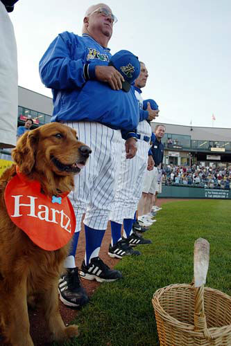 Trenton Thunder&#39;s Bat Dog, Chase, lines up with the team next to Thunder Manager Stump Merrill during the National Athem in Trenton, N.J., Friday, April 30, 2004. Chase works day and night, fetching bats from the dirt near home plate, carrying water to the umpires, and sprinting and leaping through the outfield _ all for little more than a rub on the tummy, or a yummy treat. &#40;AP Photo&#47;Tim Larsen&#41; <span class=meta>(AP Photo&#47; TIM LARSEN)</span>