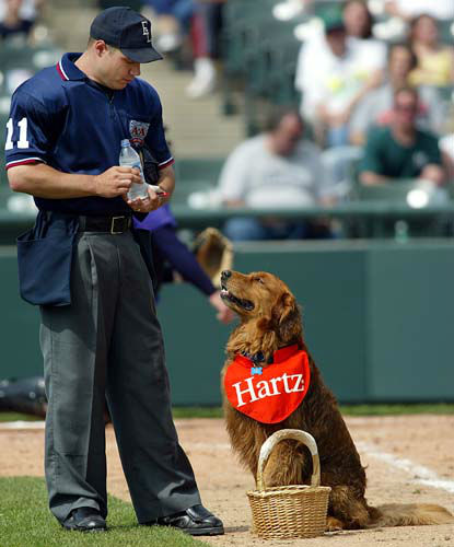 Home Plate Umpire Jeff Spisak drinks water brought out to him by Trenton Thunder&#39;s Bat Dog, Chase, in Trenton, N.J. on Saturday, May 1, 2004.  Not only does Chase retrieve bats, but he also brings bottled water out to the thirsty umpires.&#40;AP Photo&#47;Tim Larsen&#41; <span class=meta>(AP Photo&#47; Tim Larsen)</span>