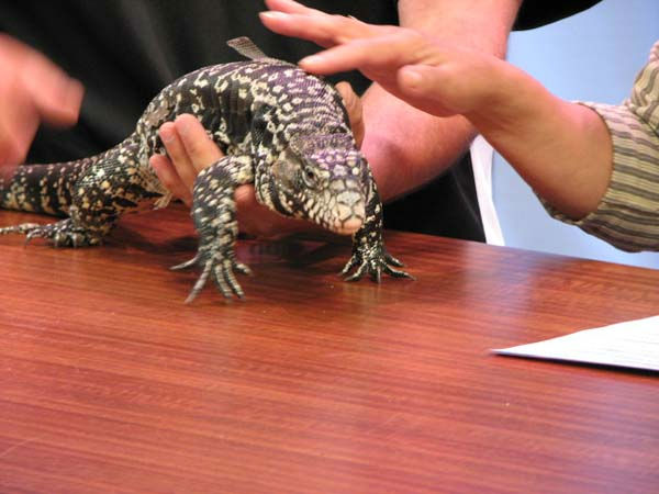 "<div class=""meta ""><span class=""caption-text "">Santa's Village in East Dundee brought four of their friendly critters for a visit to ABC7's studios on Tuesday, July 31, 2012. With critters like the white tegu (the lizard), a haired tarantula, wallaby babies and a laughing kookaburra (the bird), this visit brought plenty of fun.  (WLS Photo/ Shantelle Jefferson)</span></div>"