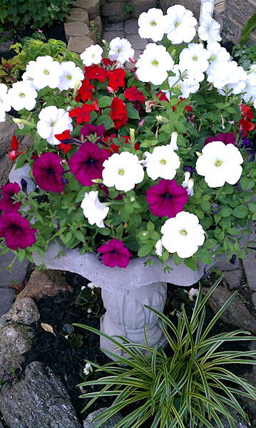 Petunias and some other plants in Adam Joseph's home garden.