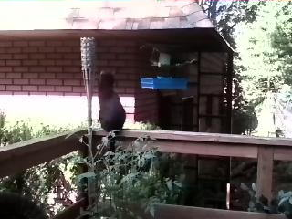 Shasta the cat likes to check out birds Gino and Gina. They all live with Action News engineer Tom Cresta.