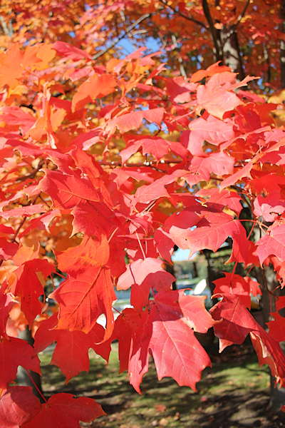 "<div class=""meta ""><span class=""caption-text "">Some of the autumn leaves at the Action News outside weather position.</span></div>"