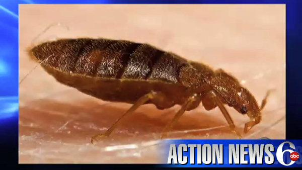 VIDEO: Bedbugs bugging firefighters
