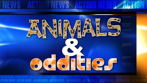 Animals and Oddities