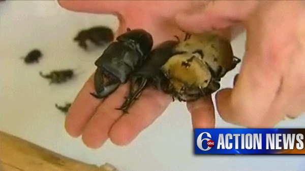 Beetles found in U.S. Mail