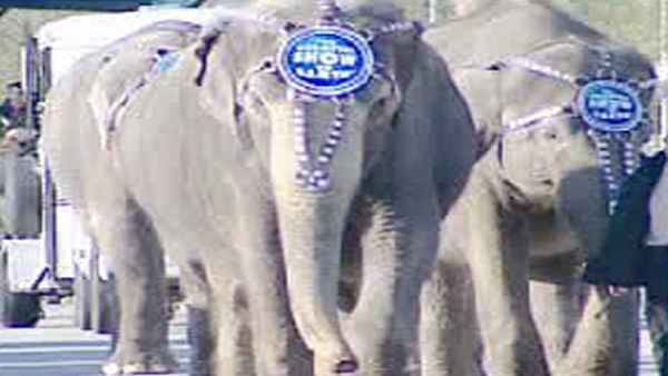 A coalition of animal welfare groups says it has evidence that Ringling Bros. circus elephants are sometimes chained for days at a time.