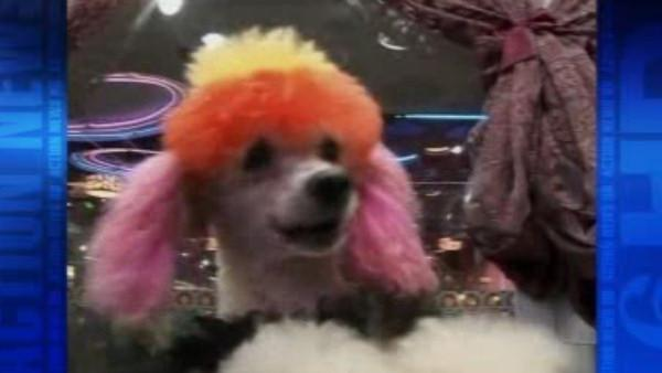 Dyed-dog craze sweeps China
