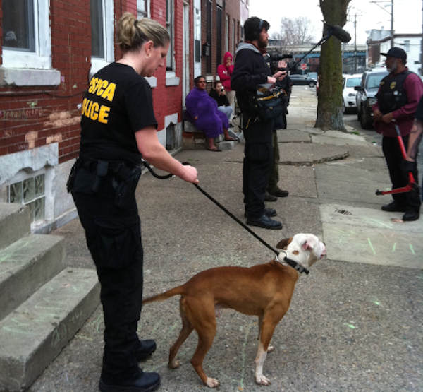 Action News was there as the SPCA raided an alleged dog fighting operation in 2800 block of Boudinot Street in Philadelphia's Kensington section.
